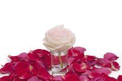 Rosa rosafarben und Blumenblätter Lizenzfreie Stockfotos