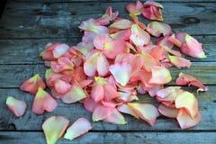 Rosa rosafarbene Blumenblätter auf Hintergrund der alten Holzoberfläche Stockfoto