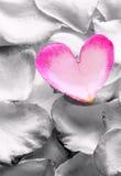 Rosa rosafarbenes Blumenblatt. Stockbild