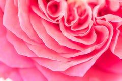 Rosa rosafarbenes Blumenblatt, Naturabstrakter begriff Stockbilder