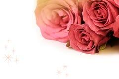 Rosa rosbukett med utrymme för text på vit bakgrund Fotografering för Bildbyråer