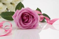 Rosa Rose Arkivfoton