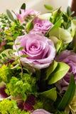 Rosa Rose Stockbilder