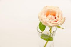 Rosa Rose, engagieren sich Ring mit Liebe im Valentinsgruß-Tag Lizenzfreie Stockfotografie