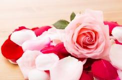Rosa Rose mit dem Blumenblatt außerdem Lizenzfreie Stockfotografie