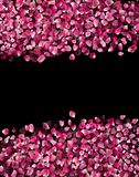 Rosa Rose Petals isolou-se no preto imagem de stock