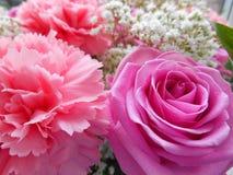 Rosa Rose und rosa Gartennelke lizenzfreies stockbild