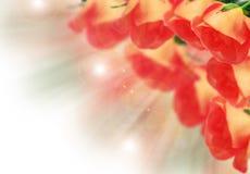 Rosen auf dem unscharfen Hintergrund lizenzfreie abbildung