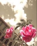 Rosa Rosen auf einem Sepiahintergrund stockbild