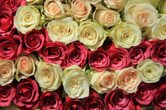 Rosa Rosen in den verschiedenen Schatten in der Hochzeitsanordnung Stockbilder