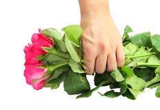 Rosa Rosen in der Hand Stockbilder
