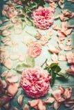 Rosa Rosen, die mit Blumen Blumenblatt und Blätter auf schäbigem schickem Hintergrund des Türkises, Draufsicht, Retro- verfassen Lizenzfreie Stockfotografie
