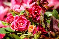 Rosa Rosen im Markt Lizenzfreie Stockbilder