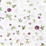 Rosa Rosen und Grünblätter auf weißem Hintergrund Lizenzfreies Stockfoto