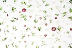 Rosa Rosen und Grünblätter auf weißem Hintergrund Stockfotografie