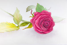 Rosa Rosenwassermalerei Lizenzfreies Stockbild