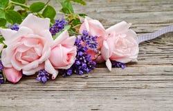 Rosa rosor Royaltyfri Fotografi