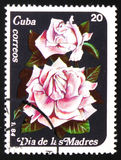 Rosa rosor, circa 1984 Arkivbild