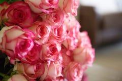 Rosa rosor dag för för valentin` s eller för moder` s Naturligt ljus, selec Royaltyfria Bilder