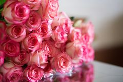 Rosa rosor dag för för valentin` s eller för moder` s Naturligt ljus, selec Royaltyfri Fotografi