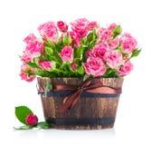 Rosa rosor för grupp i kruka Royaltyfri Foto