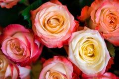 Rosa rosor i en bukett arkivfoto
