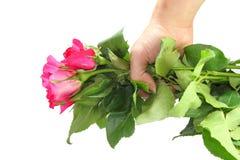 Rosa rosor i hand Arkivbilder
