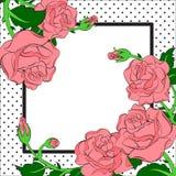 Rosa rosor och dotes ramen Royaltyfria Bilder