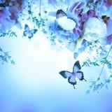Rosa rosor och fjäril, blom- bakgrund Royaltyfria Bilder