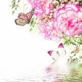 Rosa rosor och fjäril, blom- bakgrund Arkivfoton