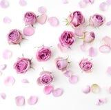 Rosa rosor och kronblad spridde på vit bakgrund lekmanna- lägenhet, över huvudet sikt Royaltyfri Bild