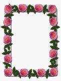 Rosa rosor på den vita träramen Arkivbild