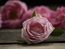 Rosa rosor på det gamla trägolvet fotografering för bildbyråer