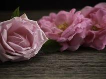 Rosa rosor på det gamla trägolvet arkivfoton