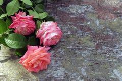 Rosa rosor på wood bakgrund Royaltyfri Foto