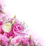Rosa rosor som är blom- arkivfoto