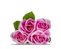Rosa rosor som vilar på exponeringsglas Royaltyfri Fotografi