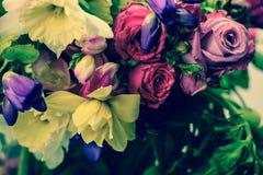 Rosa rosor, vår, colorfull Royaltyfri Fotografi
