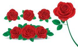 Rosa rossa Illustrazione di Stock