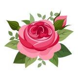 Rosa rossa. Fotografia Stock