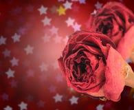rosa rossa asciutta doppia sul bokeh della stella della sfuocatura Fotografie Stock Libere da Diritti
