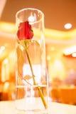 Rosa rossa in baccello dell'erba Immagine Stock Libera da Diritti