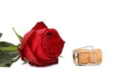 Rosa rossa bagnata e un sughero Immagine Stock Libera da Diritti