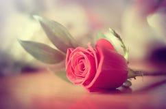 Rosa rossa che si trova sulla tavola Immagine Stock Libera da Diritti