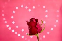 Rosa rossa con il bokeh del cuore Fotografie Stock Libere da Diritti