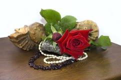 Rosa rossa con le coperture e le perle di granato e delle perle Fotografia Stock Libera da Diritti