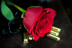 Rosa rossa con le pallottole Fotografie Stock