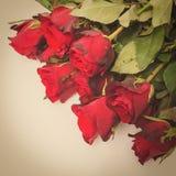 Rosa rossa con retro filte Fotografie Stock