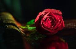 Rosa rossa da solo su una barra Fotografia Stock Libera da Diritti