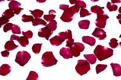 Rosa rossa degli ambiti di provenienza del primo piano sugli ambiti di provenienza bianchi Fotografia Stock Libera da Diritti
